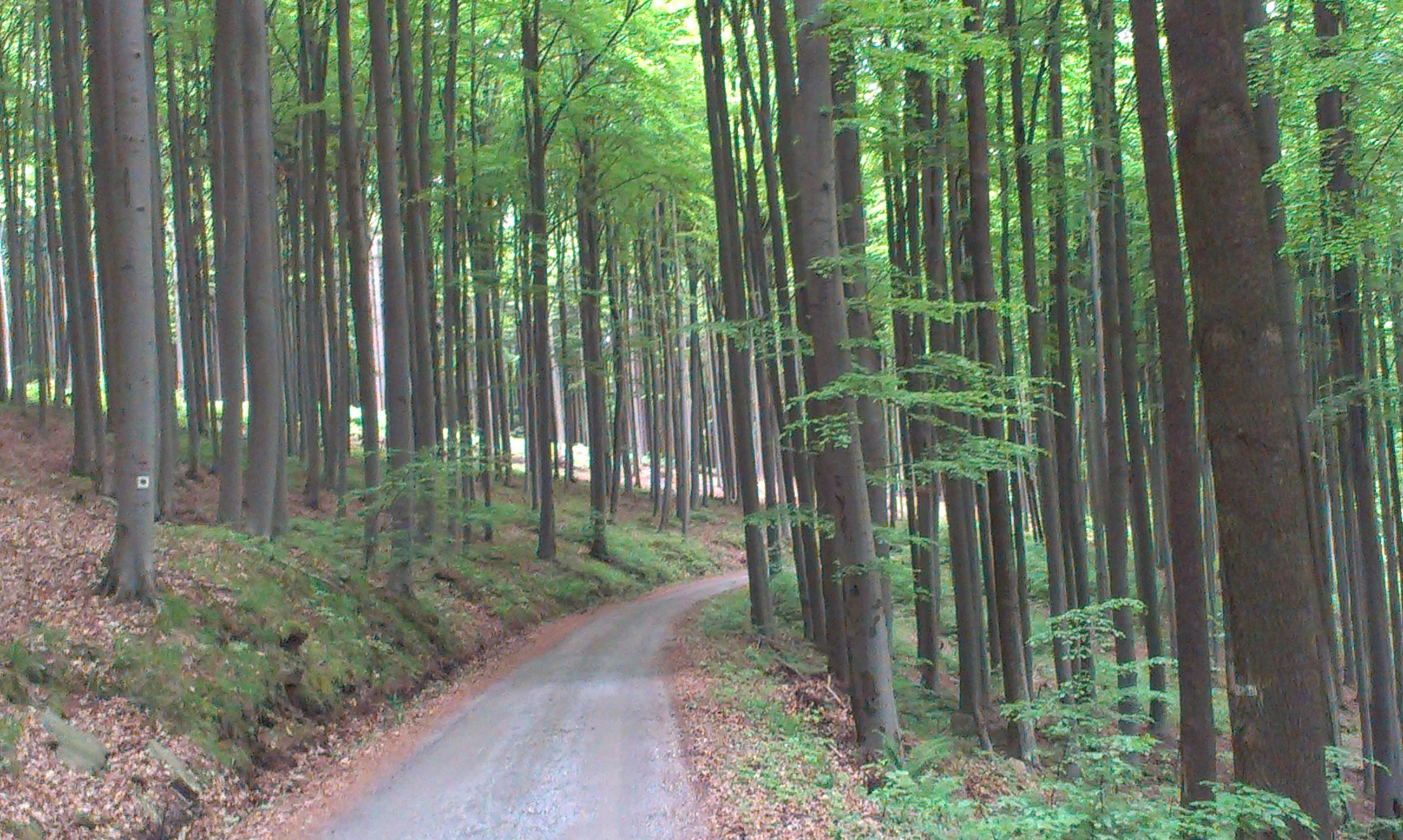 Lesní cyklostezky